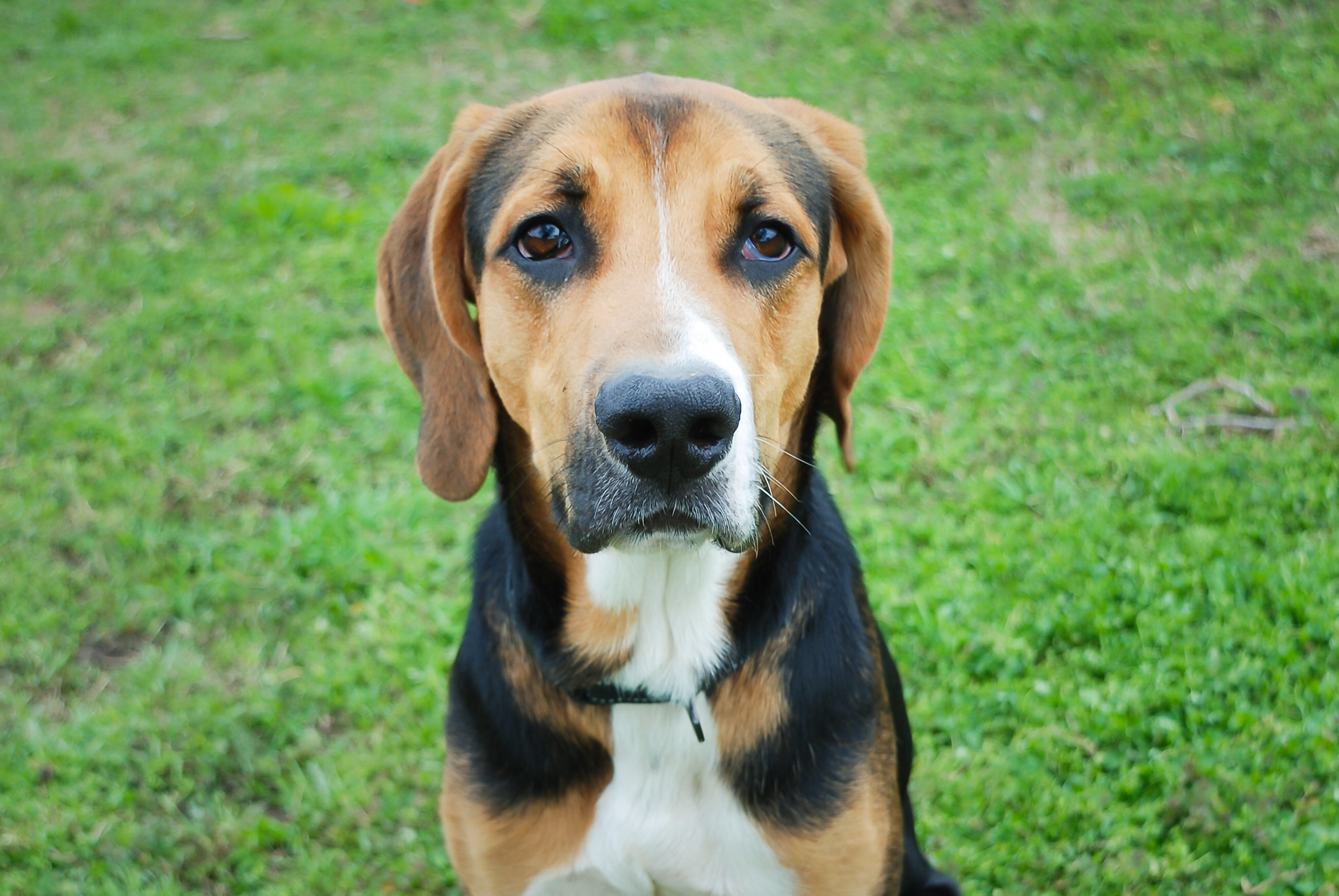 Petey with Puppy Dog Eyes