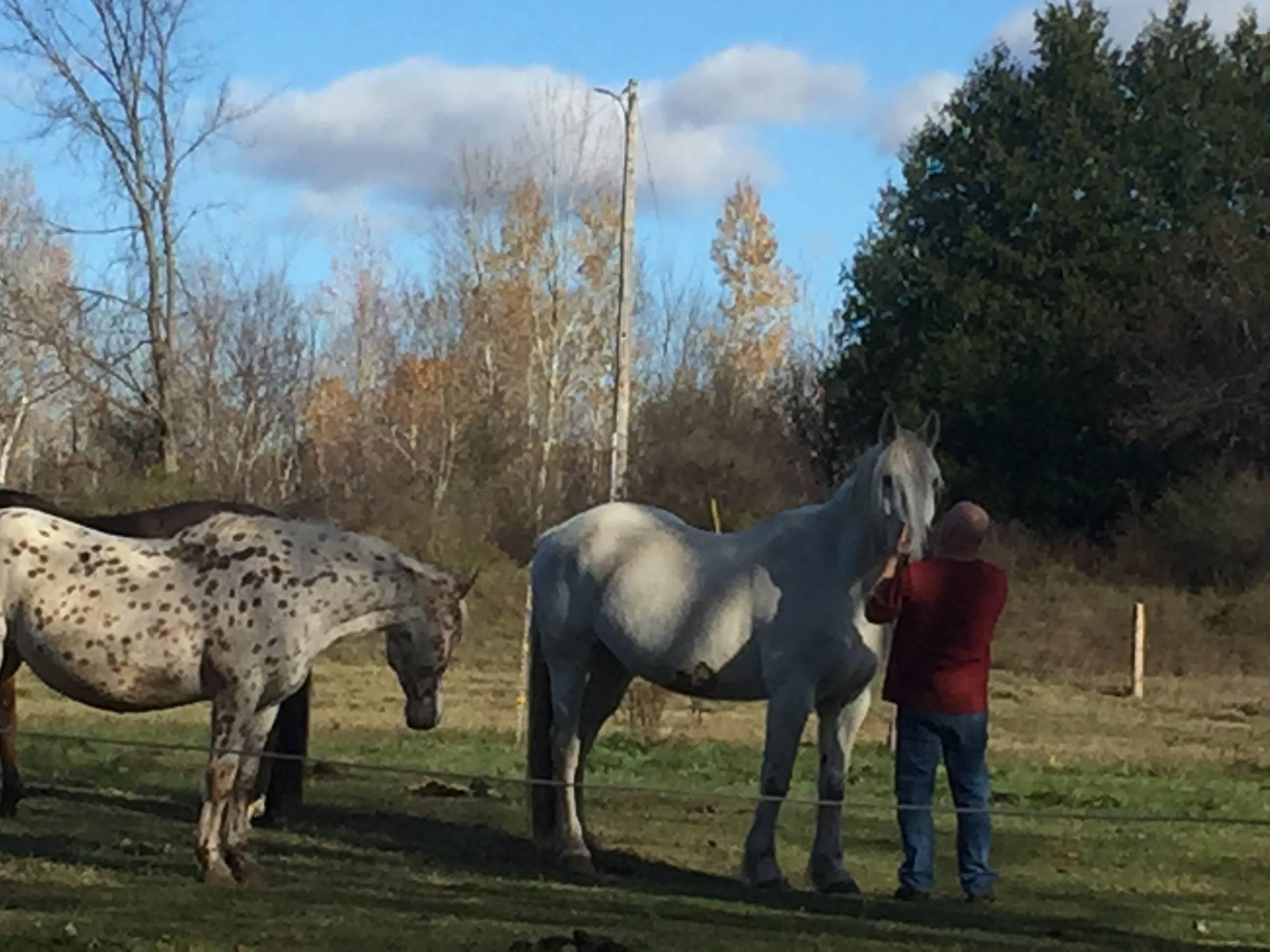 Equine Rescue