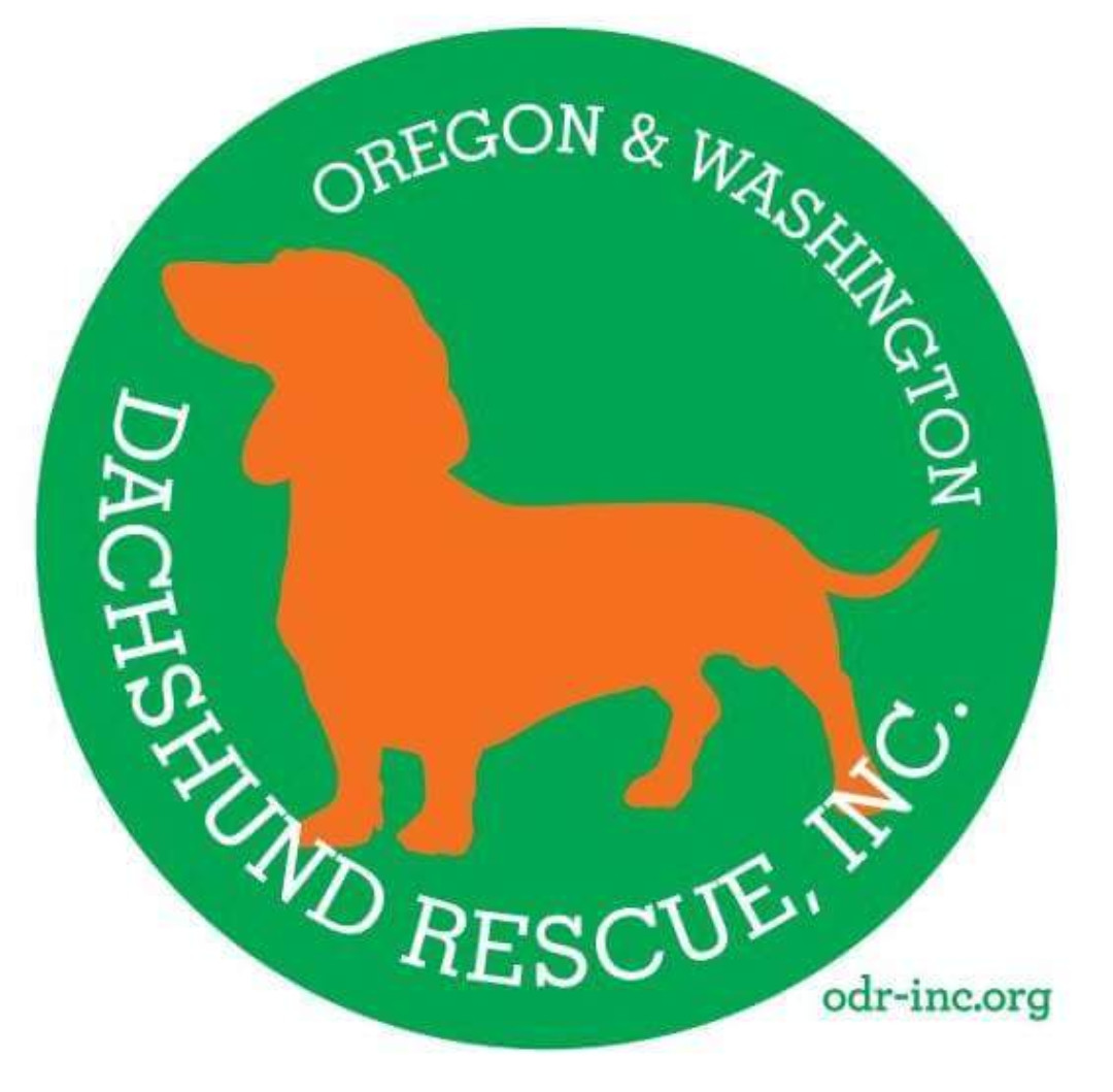 Pets For Adoption At Oregon Dachshund Rescue Inc In Portland Or