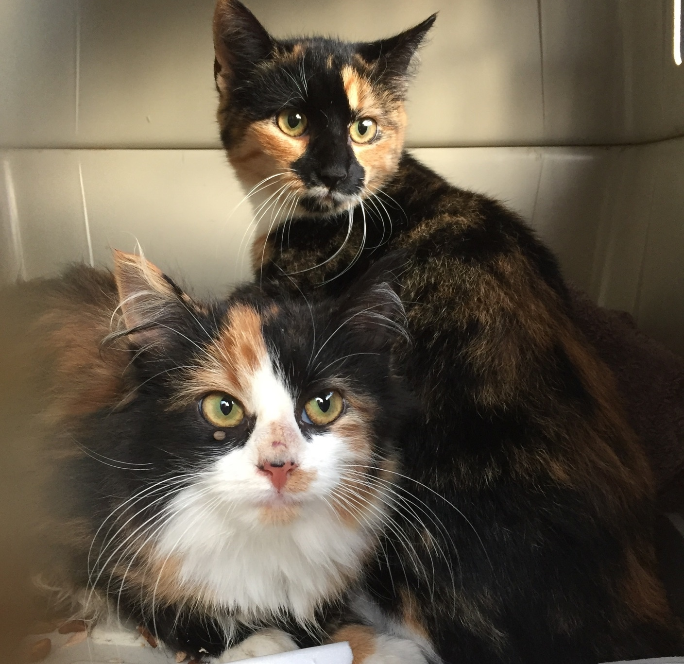 Pets for Adoption at e By e Inc in Temple PA