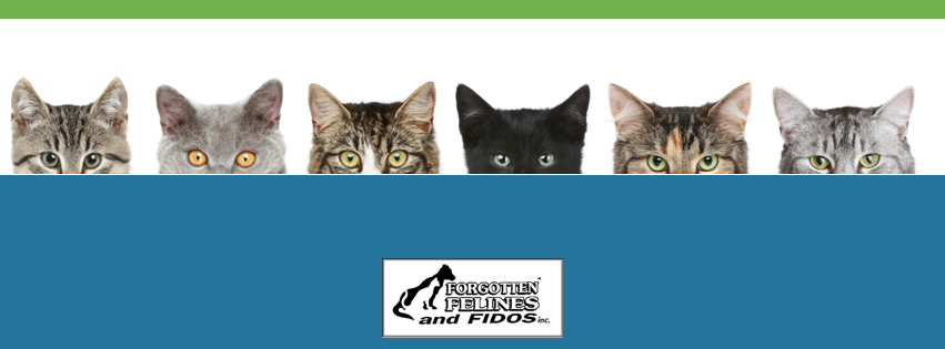 Forgotten Felines and Fidos, Inc.