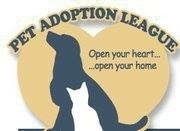 Pet Adoption League