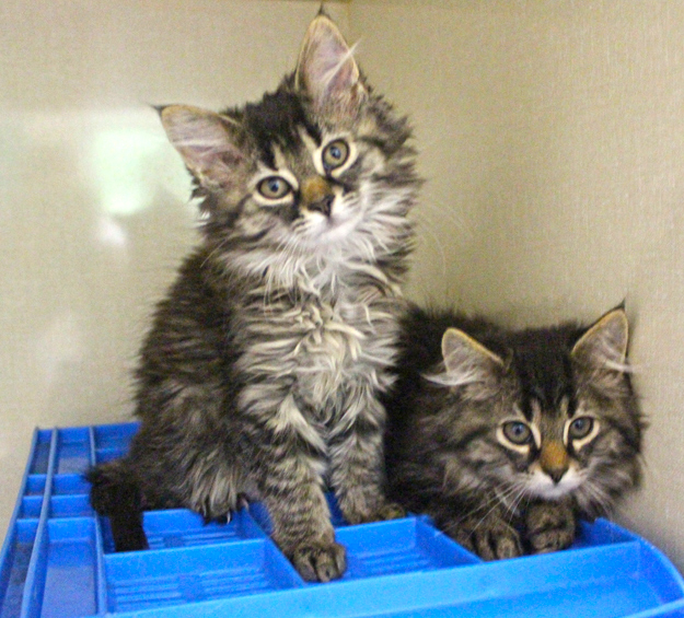 Pets for Adoption at Elk County Humane Society, in Saint