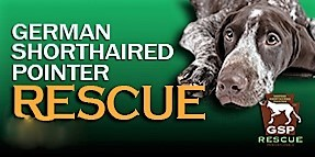 German Shorthaired Pointer Rescue PA, Inc.