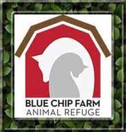 Blue Chip Farm