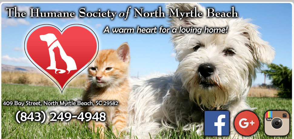 Pets for Adoption at The Humane Society of North Myrtle