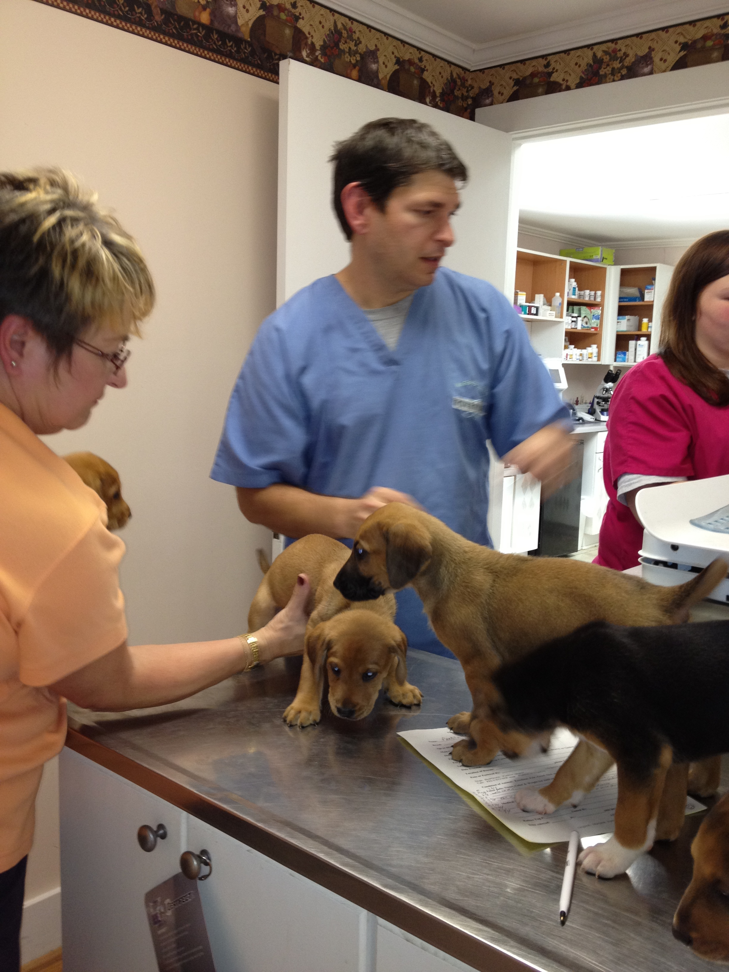 All dogs & cats are vaccinated and fixed.