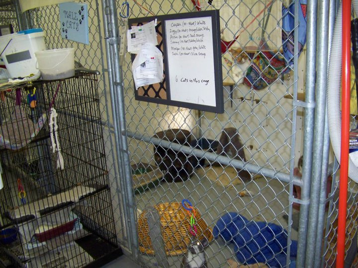 1 of 3 communal cat cages