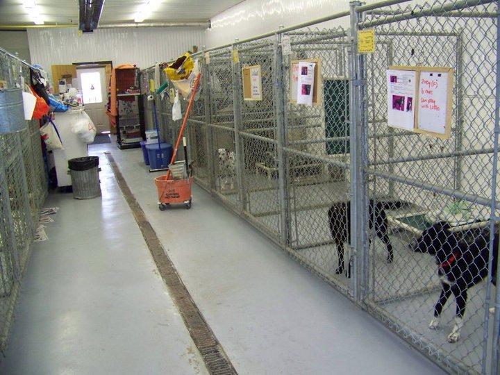 inner dog kennels