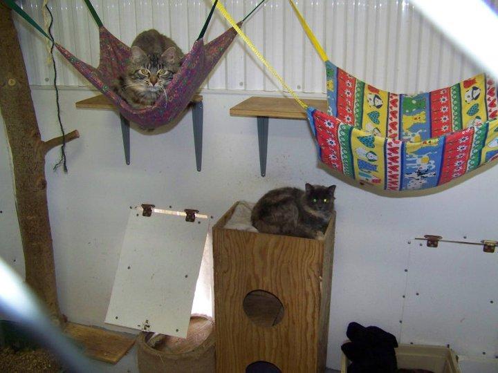 communal cat cage