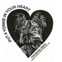 Pets for Adoption at Yorkshire Terrier National Rescue Inc , in