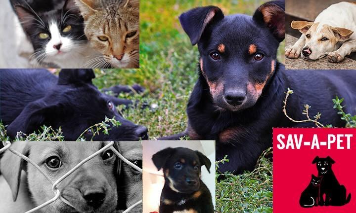 Sav-A-Pet, Inc.