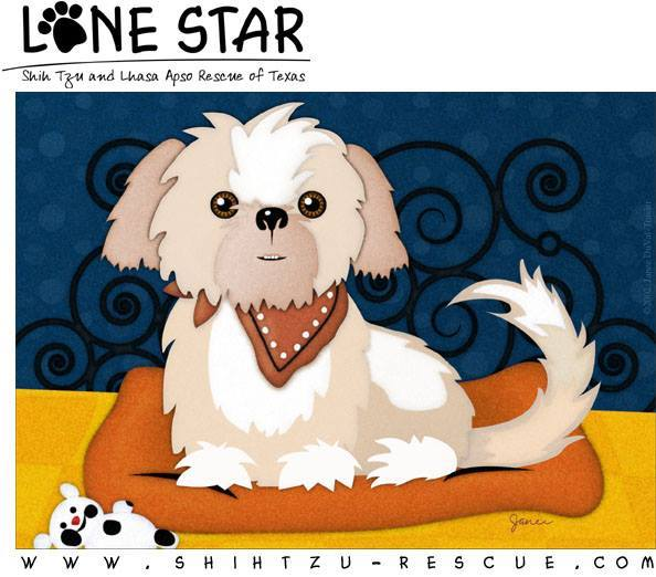 Pets For Adoption At Lone Star Shih Tzu And Lhasa Apso Rescue In