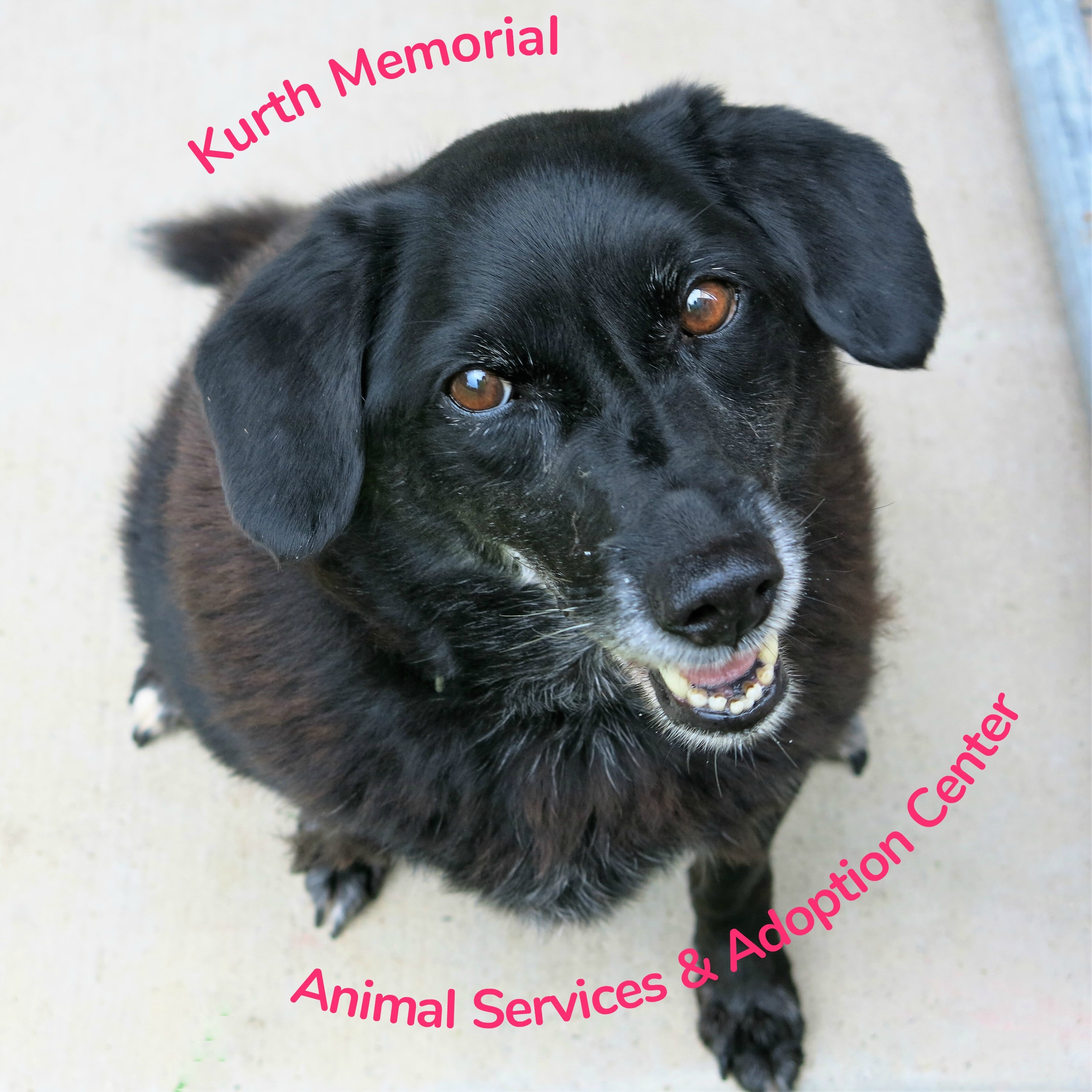 Kurth Memorial Animal Services & Adoption Center