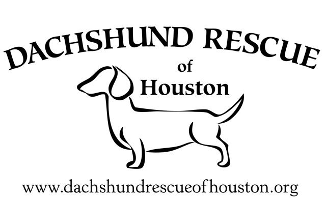 Pets For Adoption At Dachshund Rescue Of Houston In Houston Tx