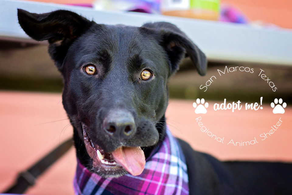 Pets for Adoption at San Marcos Regional Animal Shelter, in San