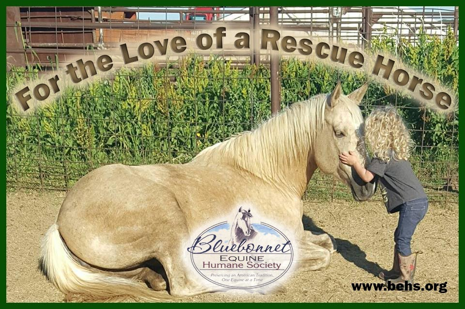 For the love of a rescue horse..