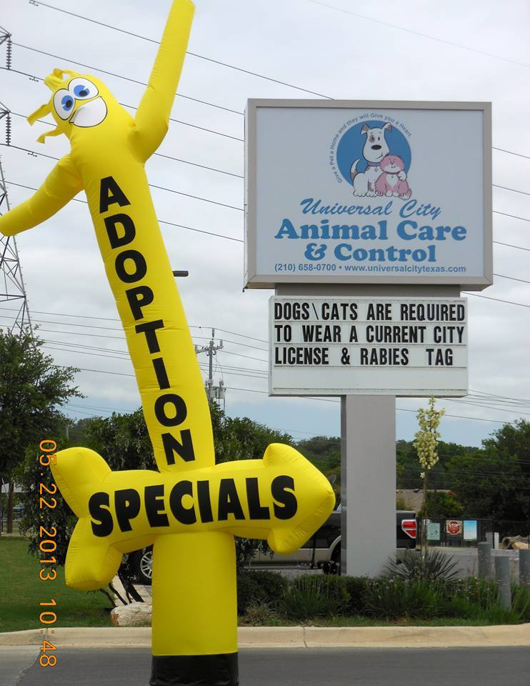Adoption Special