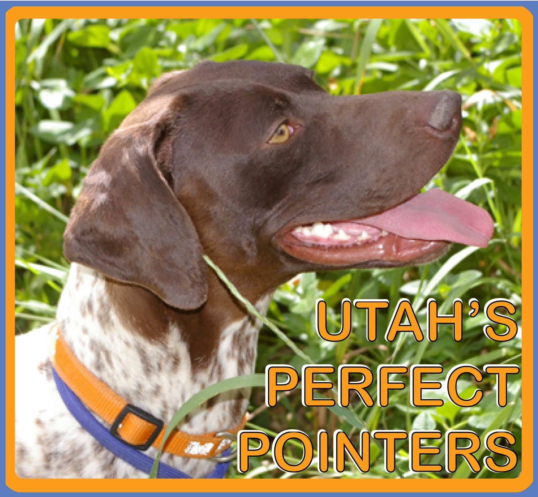 Utah's Perfect Pointers