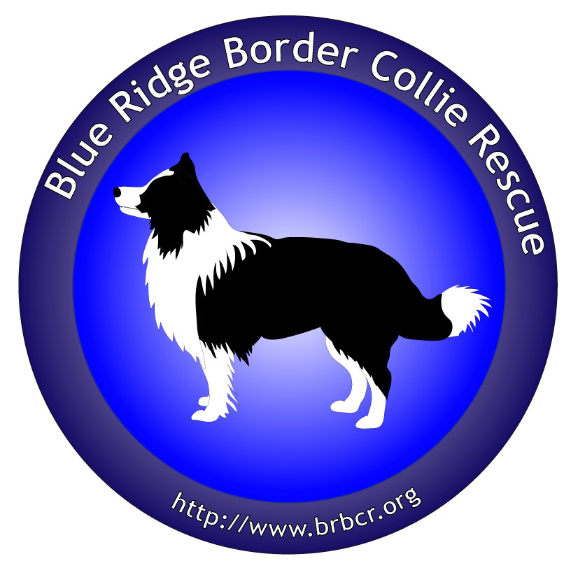 Pets for Adoption at Blue Ridge Border Collie Rescue, in Mclean, VA ...