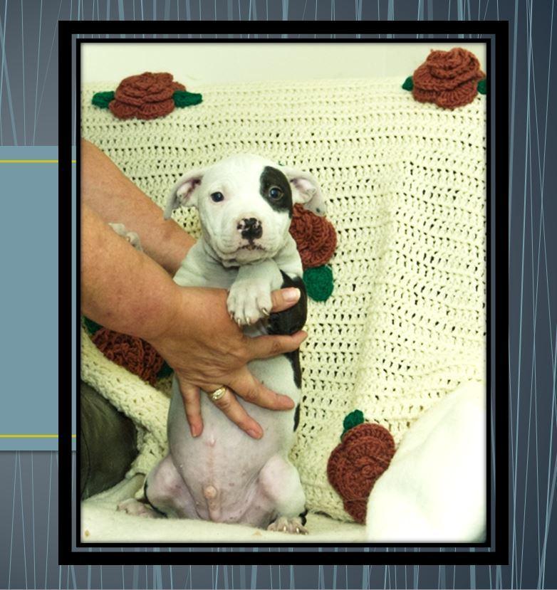 Pet Assistance League