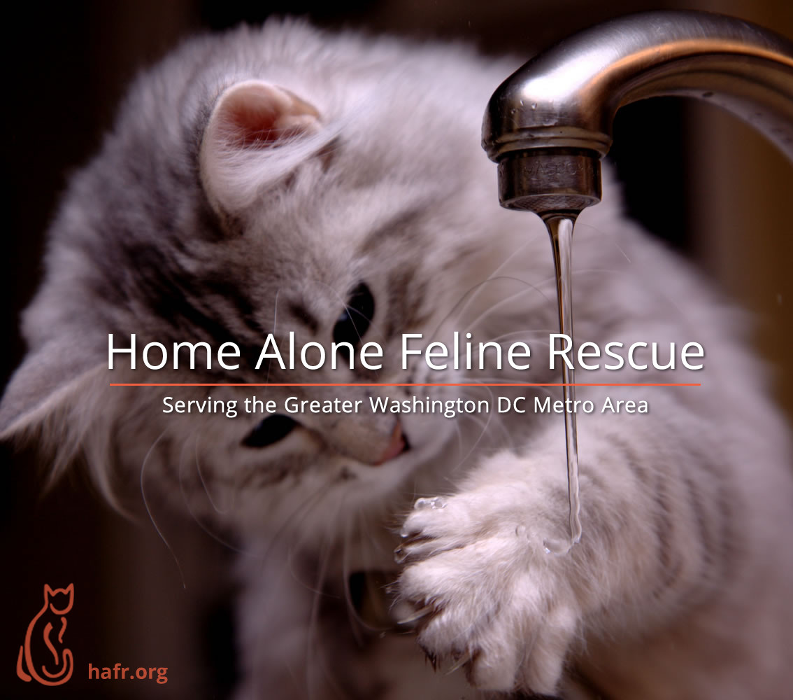 Home Alone Feline Rescue