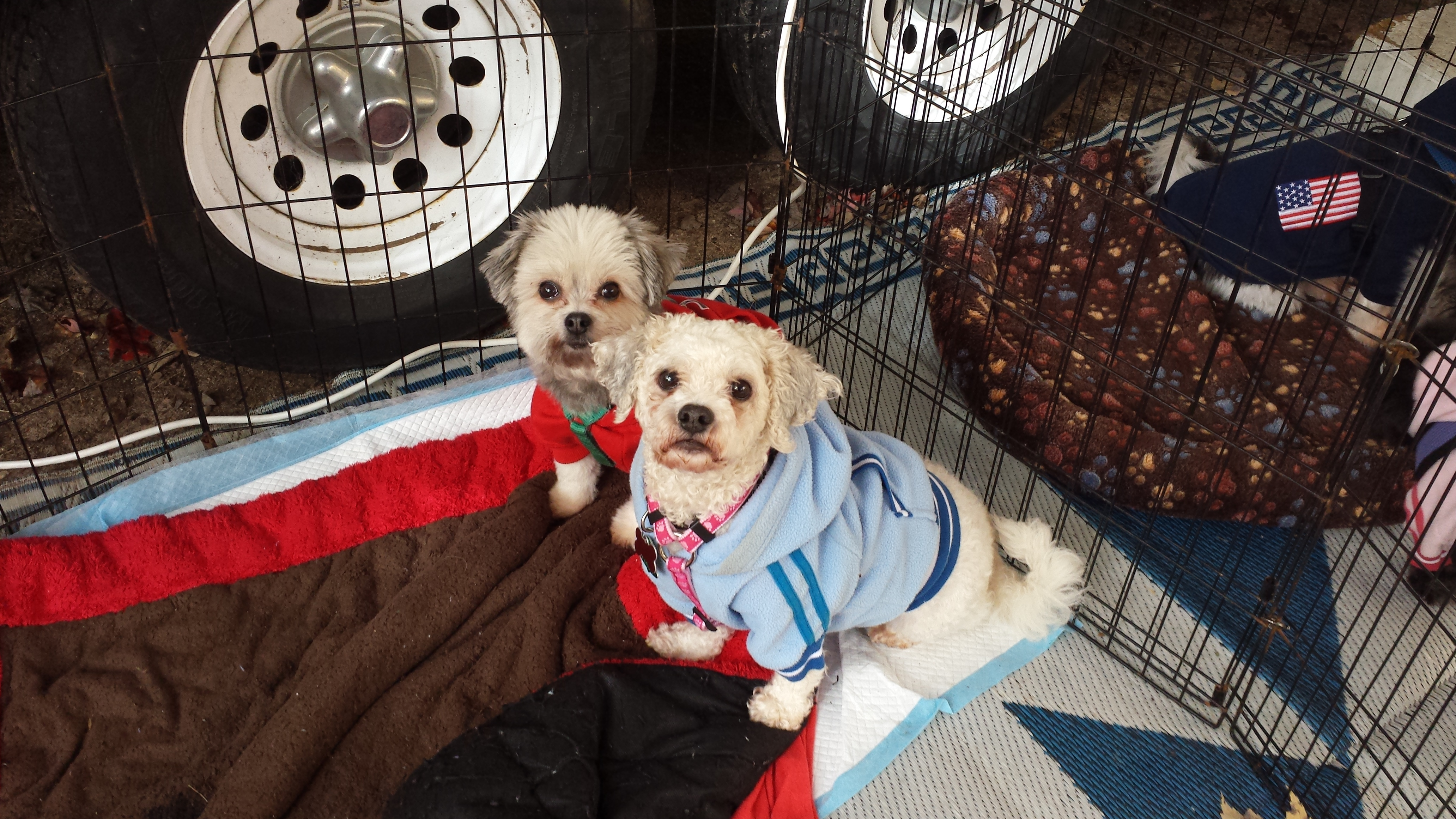 Pets for Adoption at Shih Tzu Rescue of Central WI, in