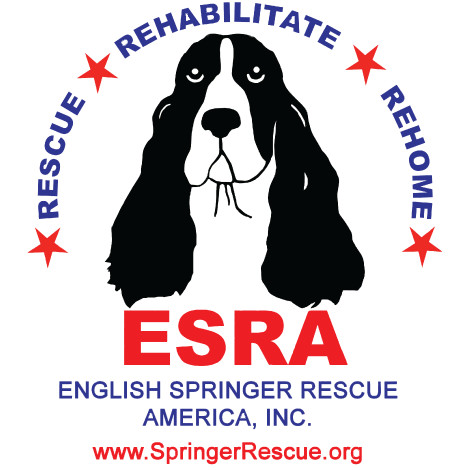 Pets for Adoption at English Springer Rescue America, Inc