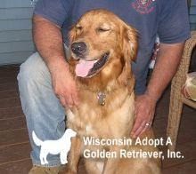 Pets For Adoption At Wisconsin Adopt A Golden Retriever Inc In