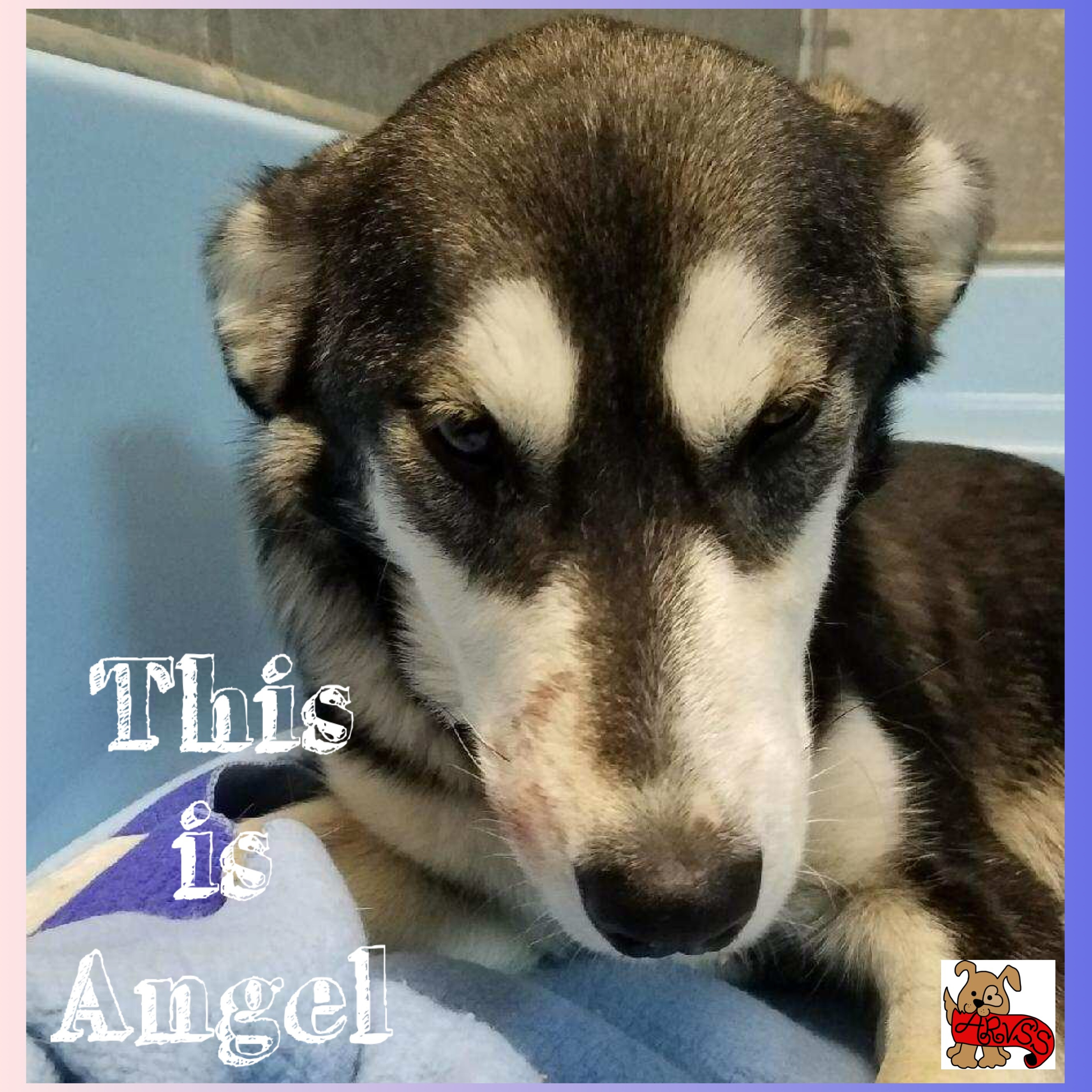 Help us Help Angel!  See our FB page