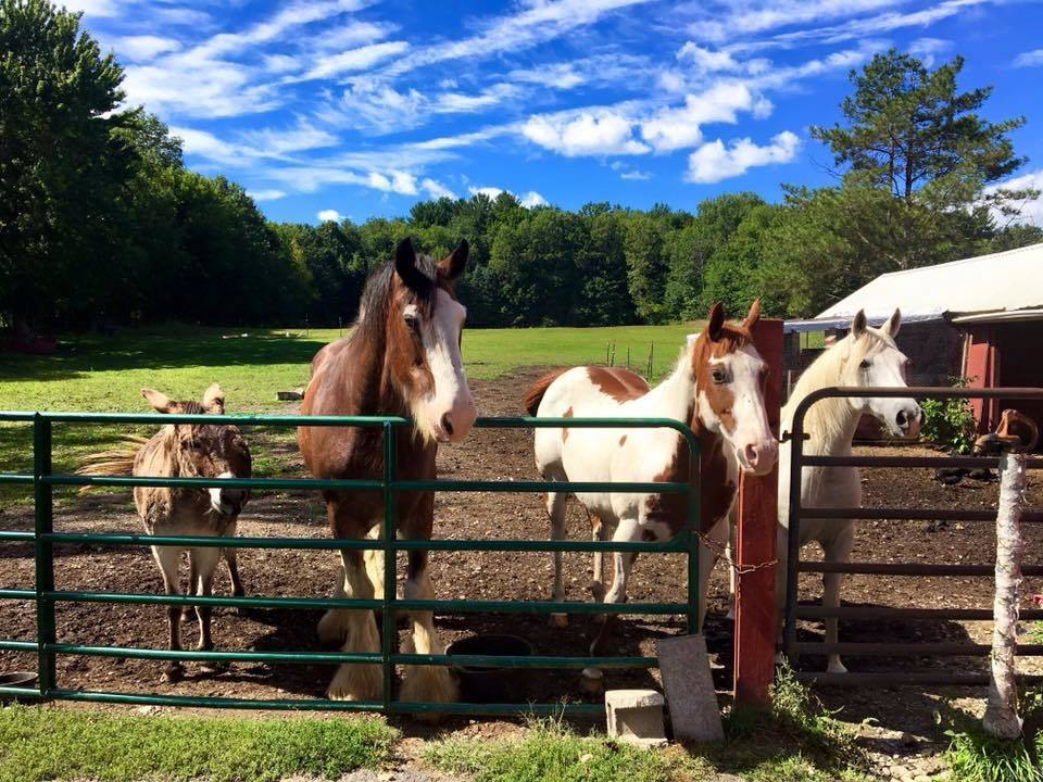 Gretchen the donkey with her horse friends.