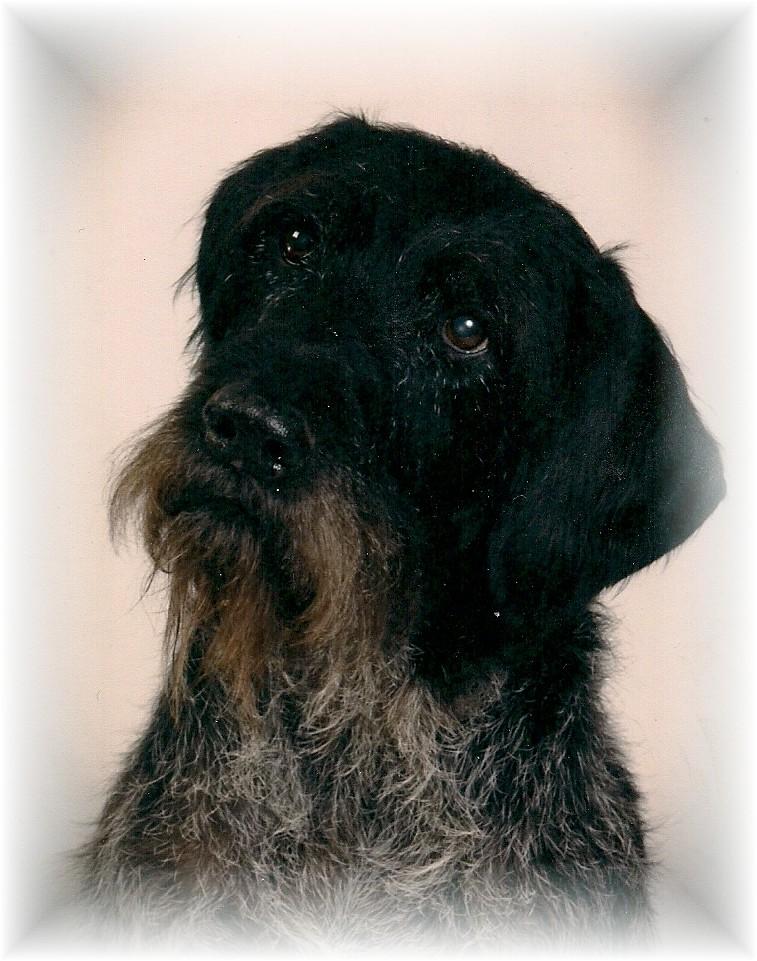 Blue Line Kennel Pet Rescue