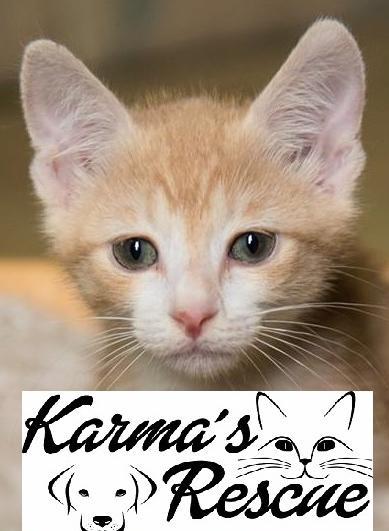 Karma's Rescue