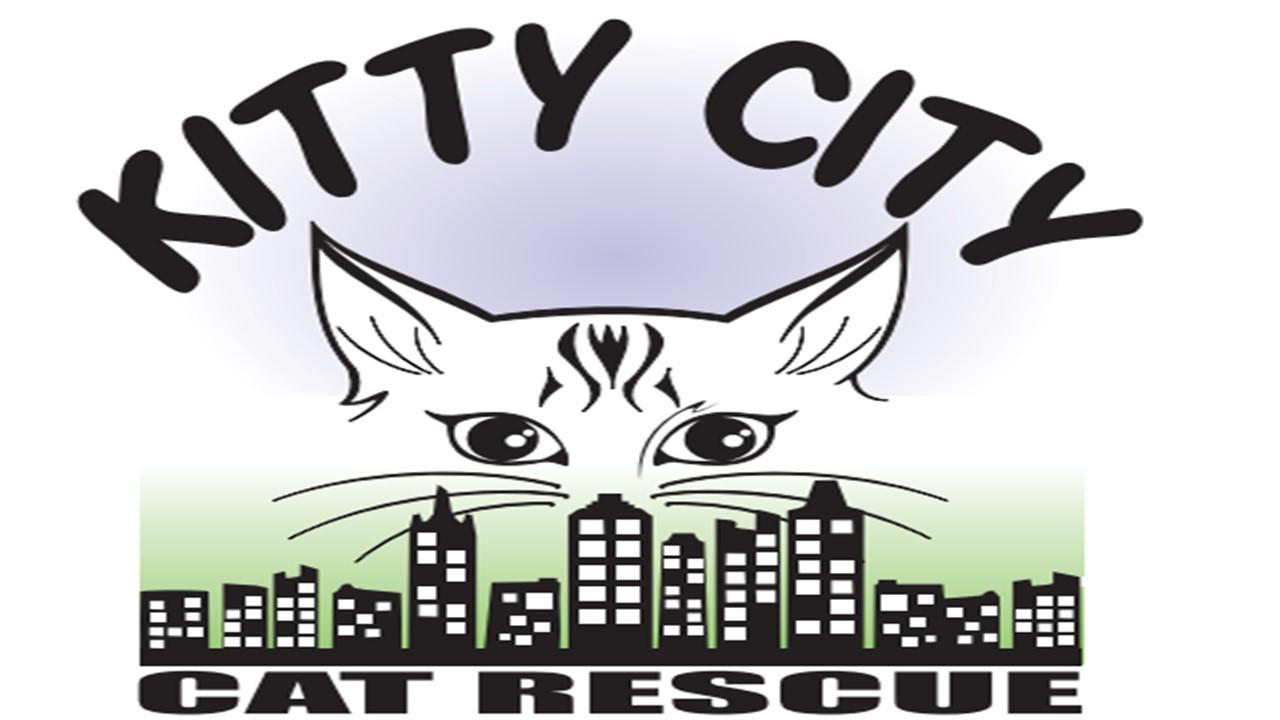 Kitty City Cat Rescue