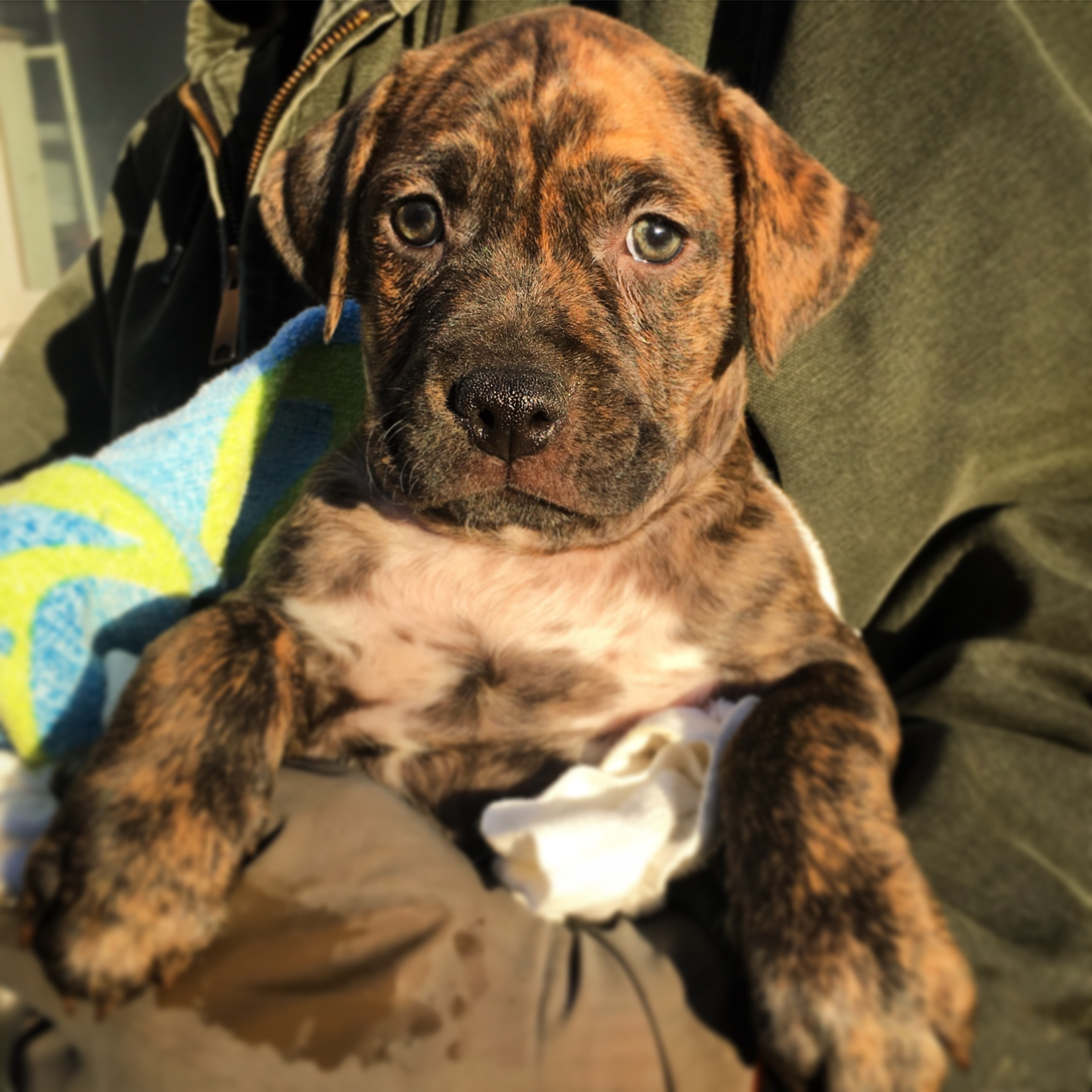 Pets for Adoption at Animal Pawtectors, in Cortland, OH   Petfinder