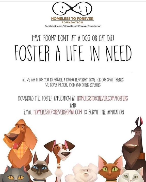 Pets for Adoption at Homeless To Forever Foundation