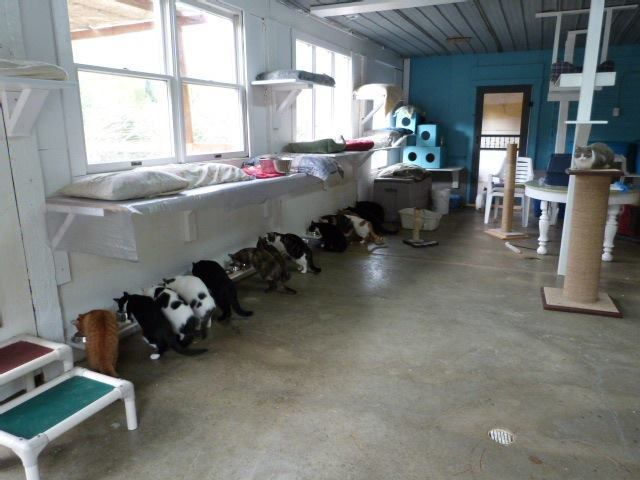 Our shelter cats at mealtime.