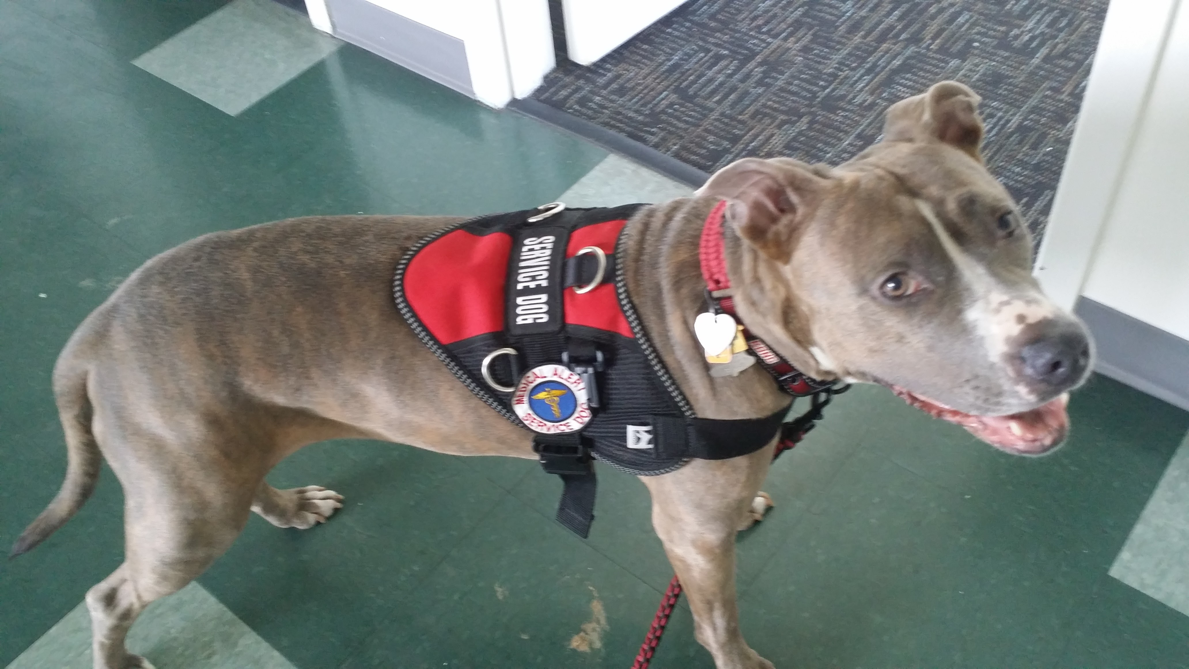 Rescue dogs make great service dogs!
