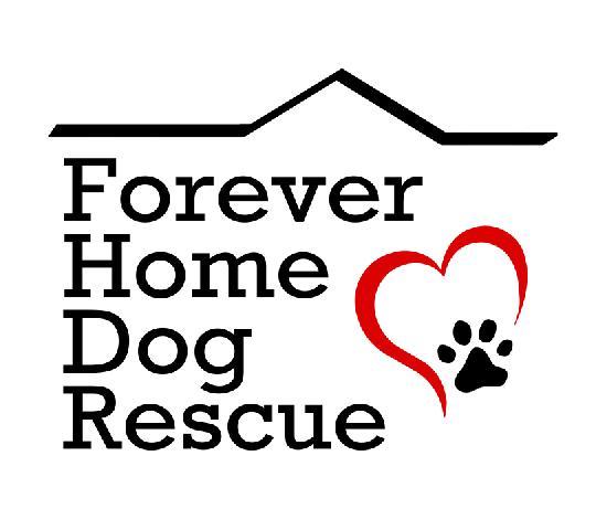 Mountlake Terrace Dog Rescue