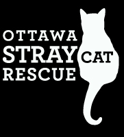 c1a033d57a Pets for Adoption at Ottawa Stray Cat Rescue