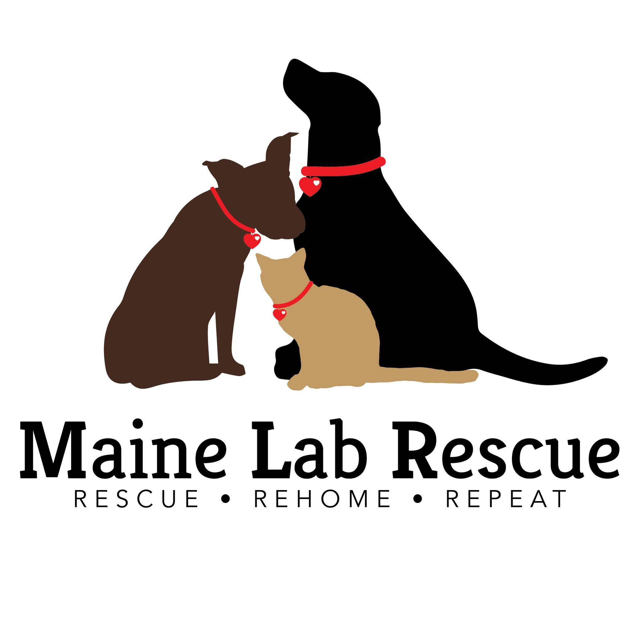 pets for adoption at maine lab rescue  in windham  me