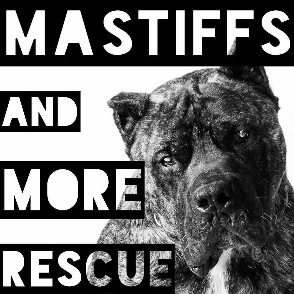 Mastiffs and More Rescue Tx