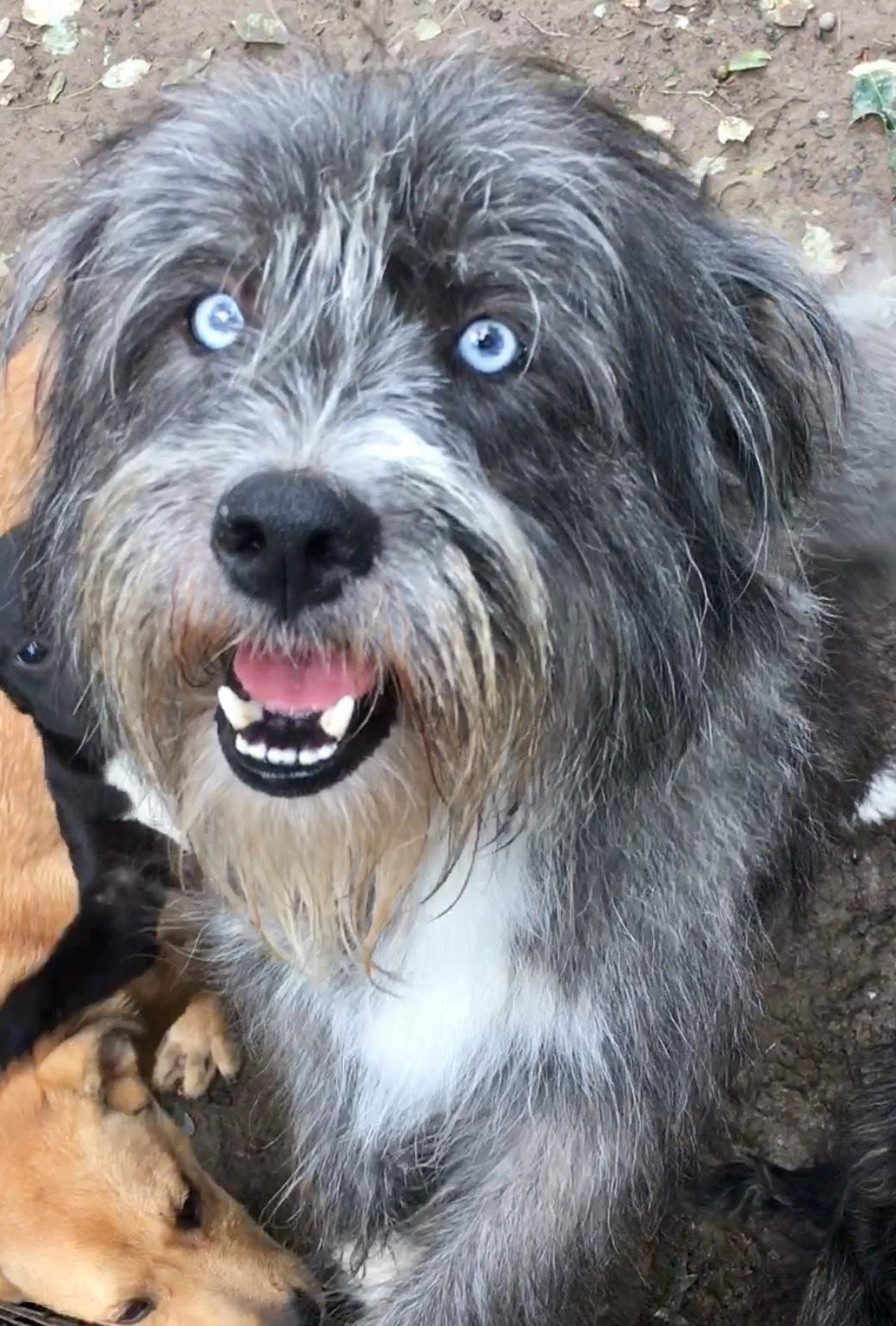 Mercer Animal Rescue