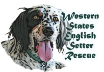 Western States English Setter Rescue