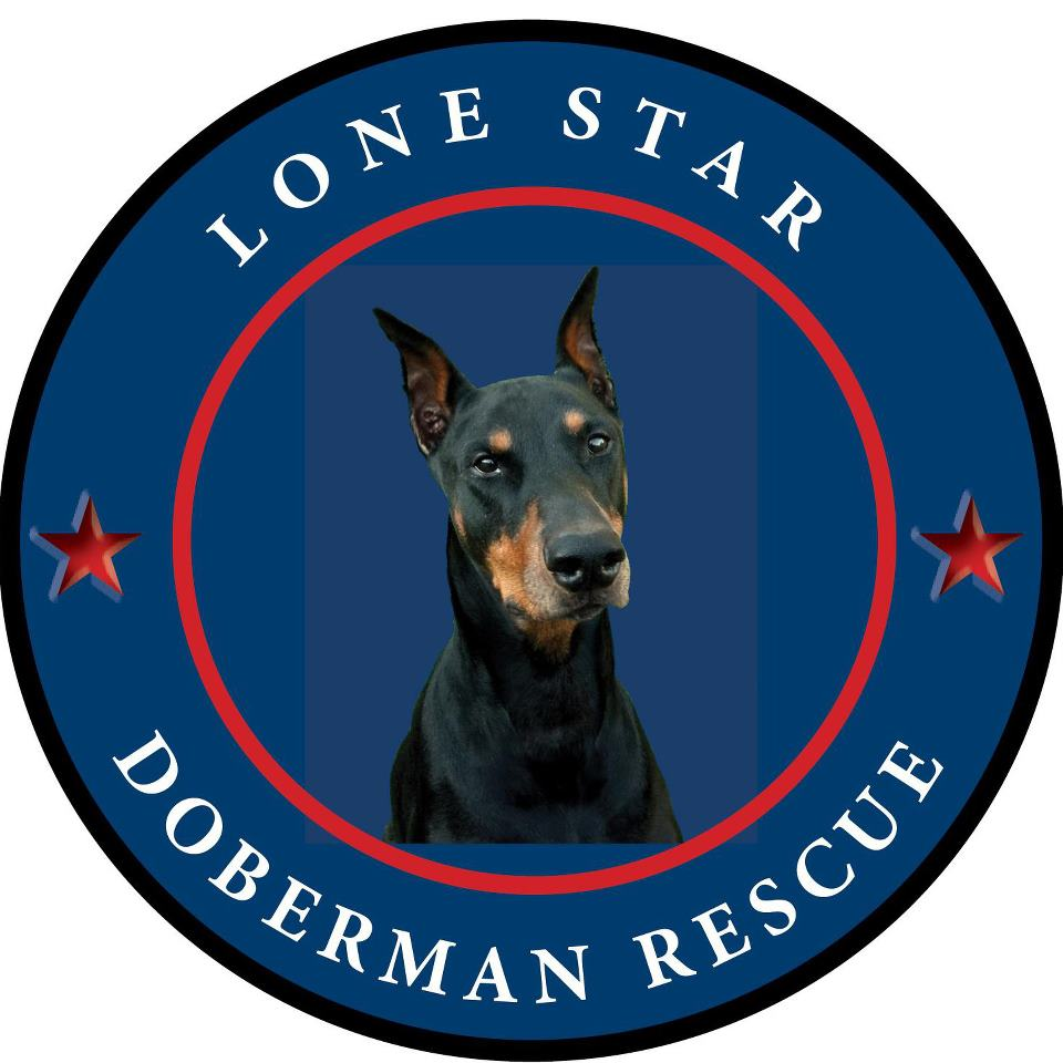 Pets for Adoption at Lone Star Doberman Rescue, in Benbrook