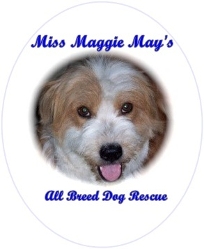 Pets for Adoption at Miss Maggie May's Rescue, in Tucson, AZ