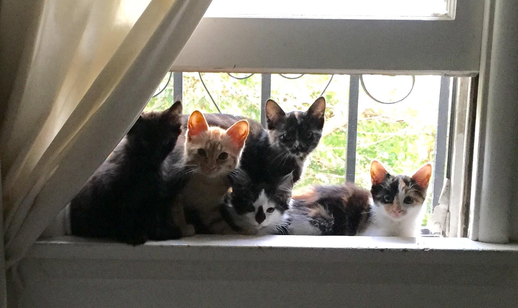 Always so many kittens in need