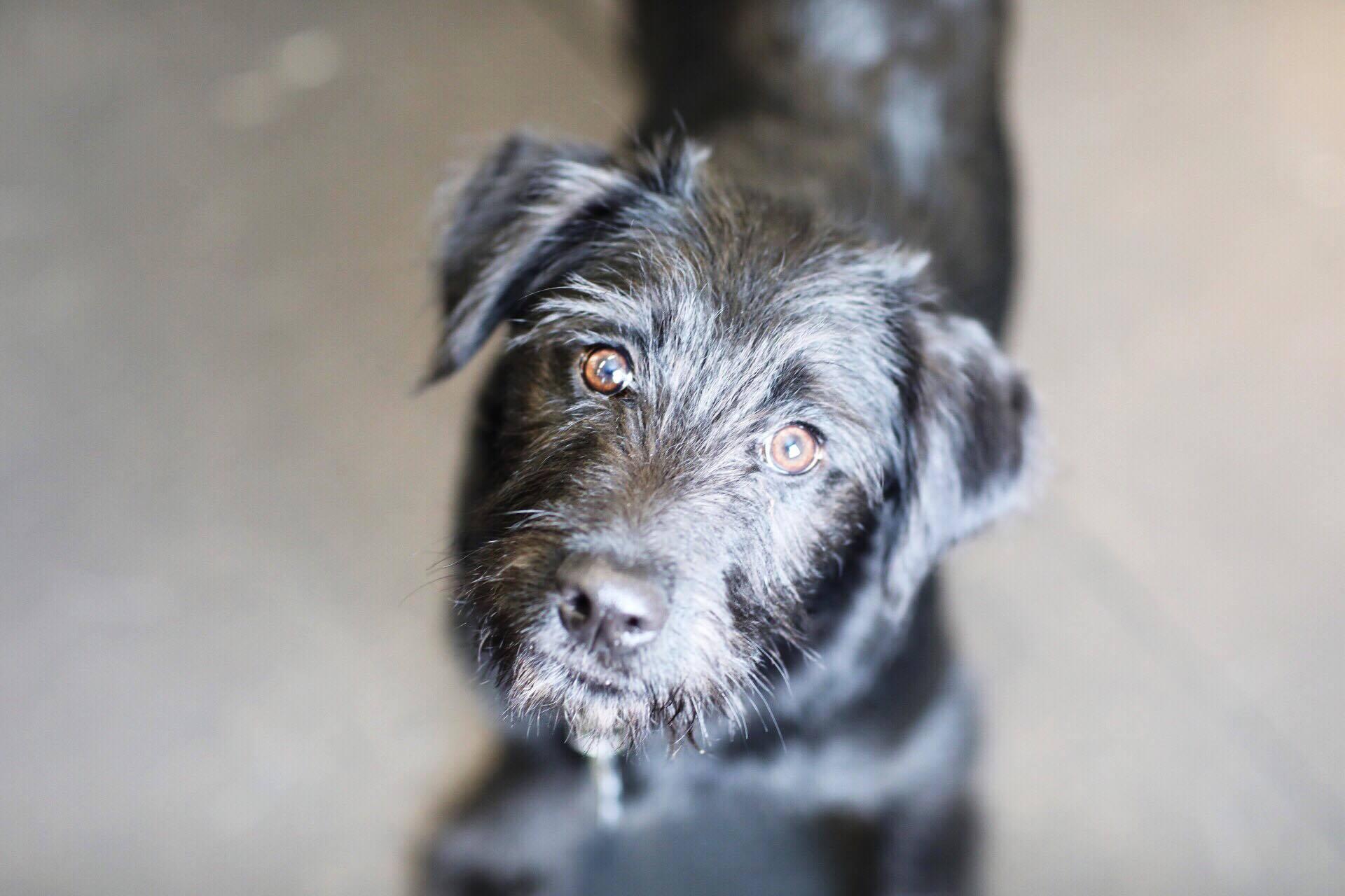 pets for adoption at helping paws, in gorham, me | petfinder