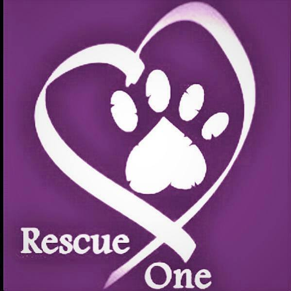 Happy Tails Dog And Cat Grooming Pets For Adoption At