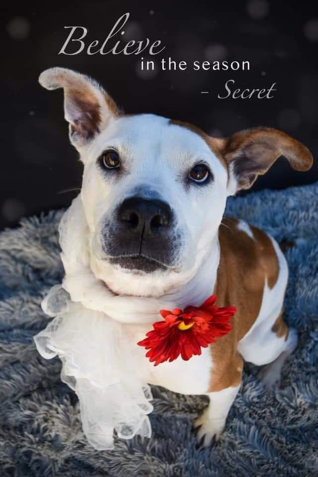 Sweet Secret